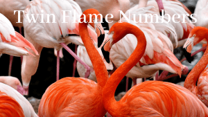 Twin Flame Numbers